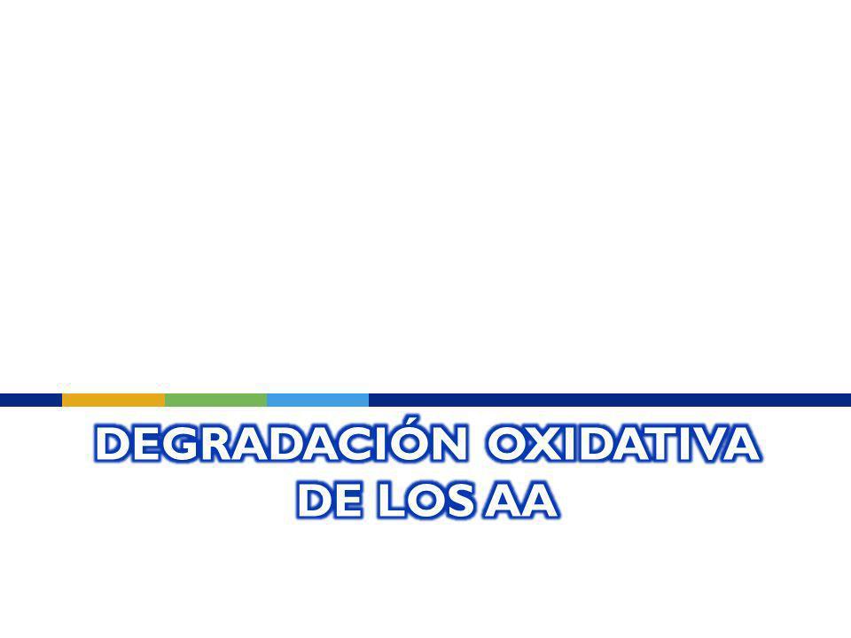 Degradación Oxidativa de los AA