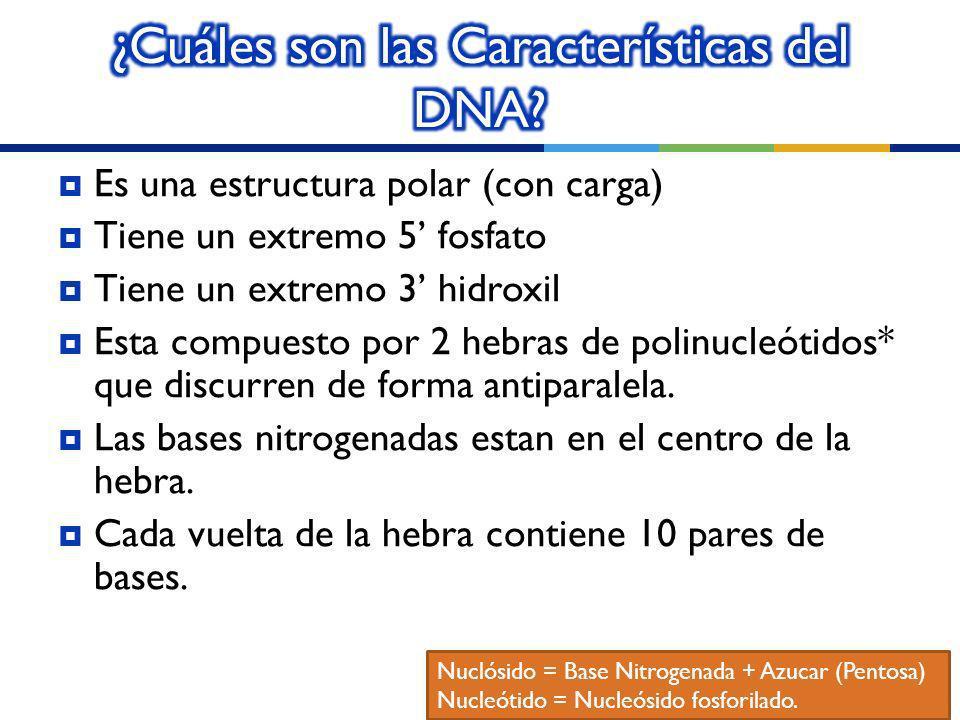 ¿Cuáles son las Características del DNA