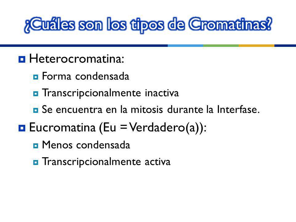 ¿Cuáles son los tipos de Cromatinas