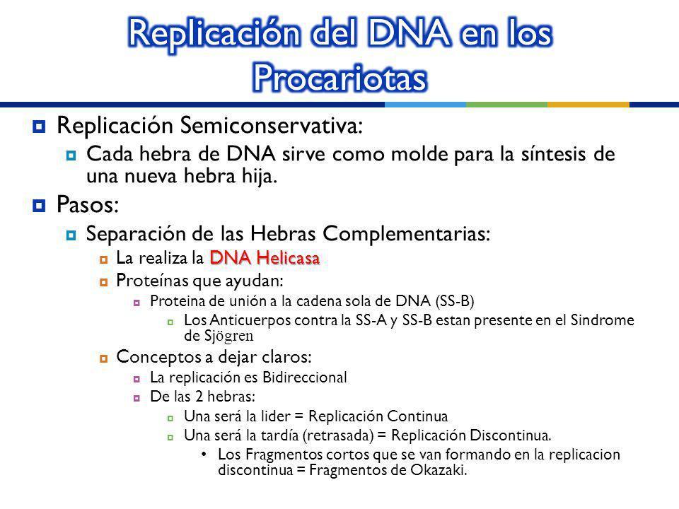Replicación del DNA en los Procariotas