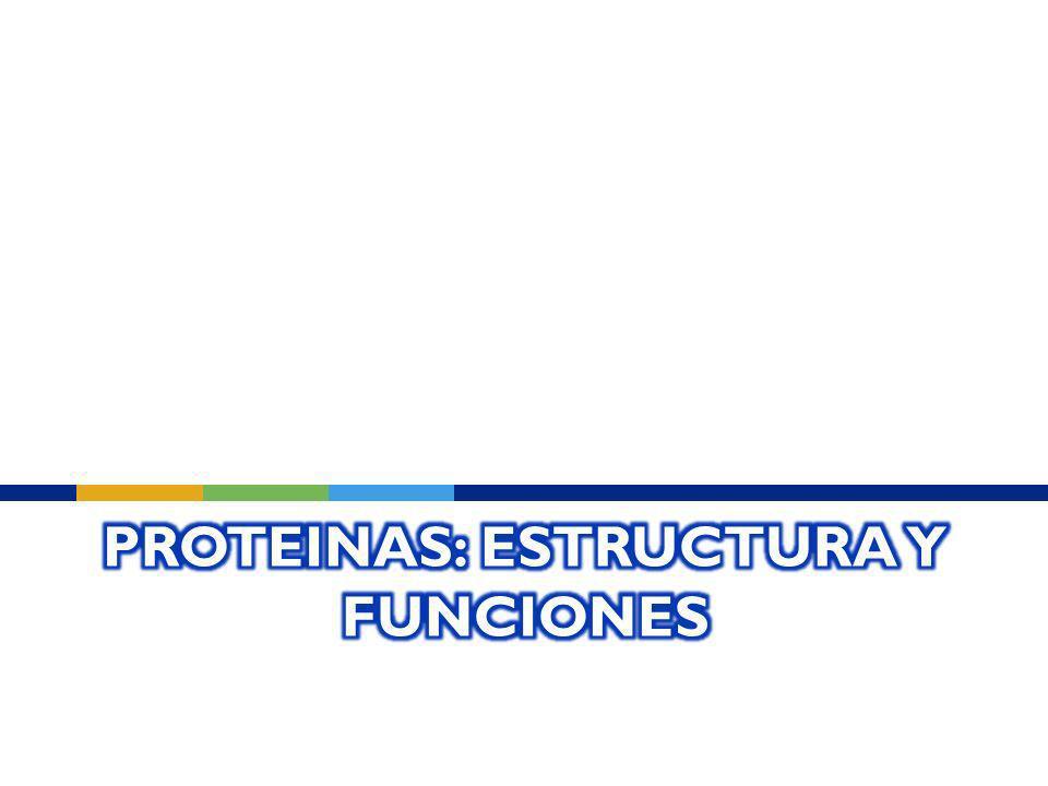 Proteinas: Estructura y Funciones
