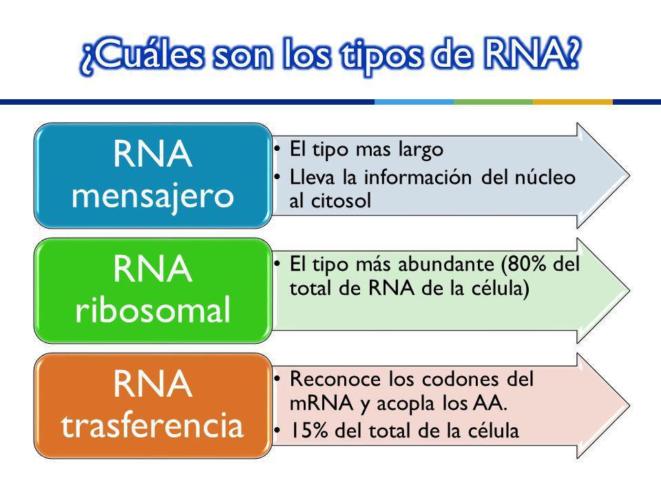 ¿Cuáles son los tipos de RNA