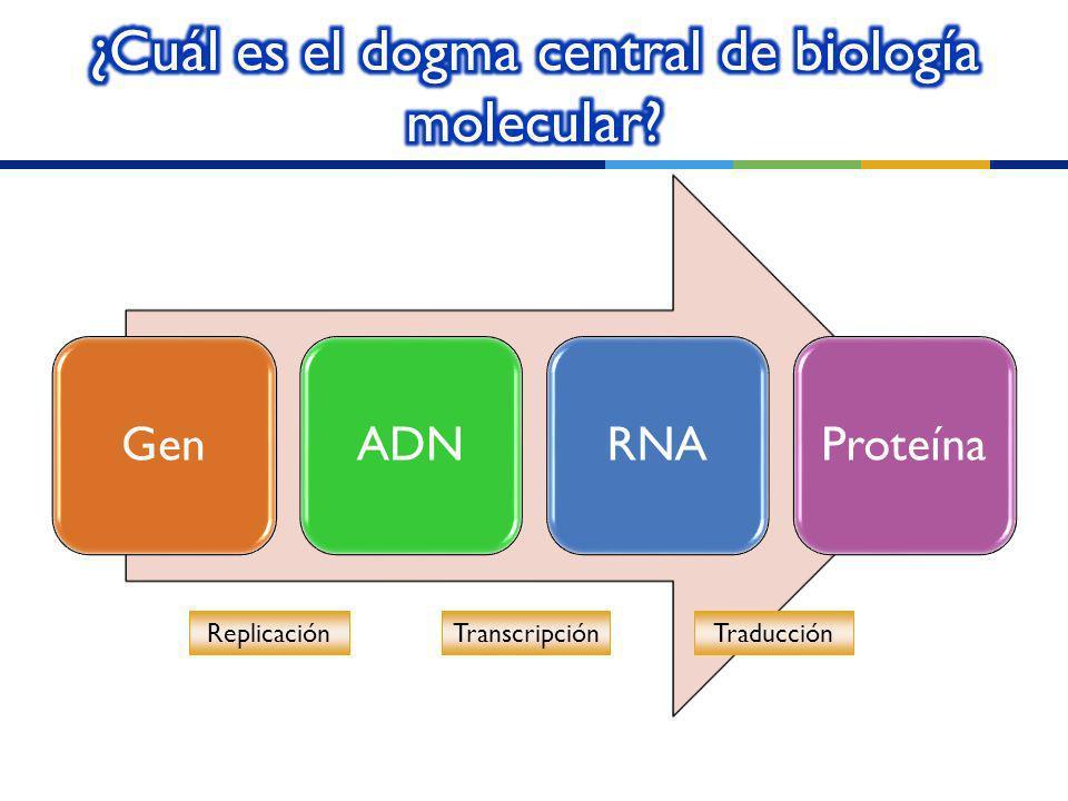 ¿Cuál es el dogma central de biología molecular
