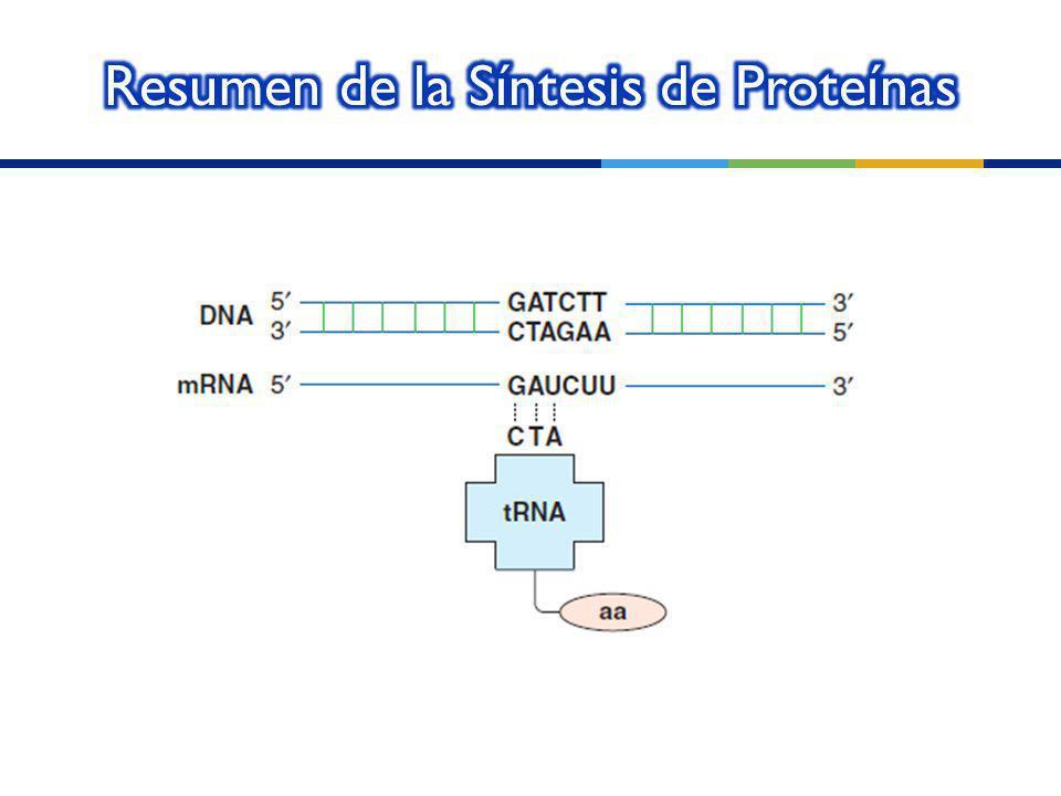 Resumen de la Síntesis de Proteínas