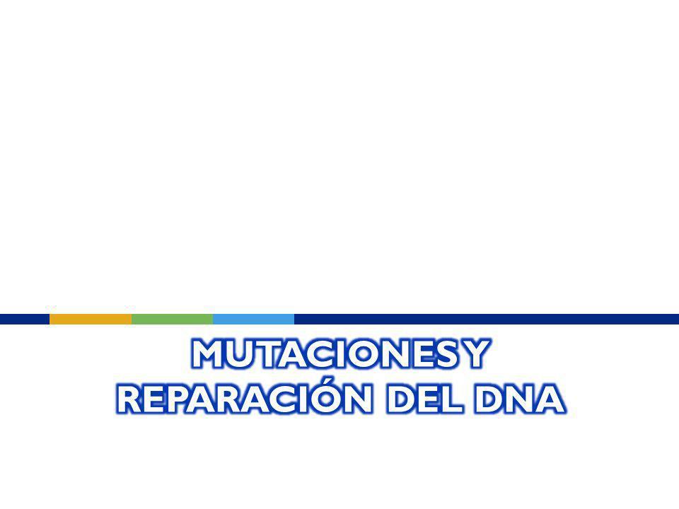 Mutaciones y Reparación del DNA