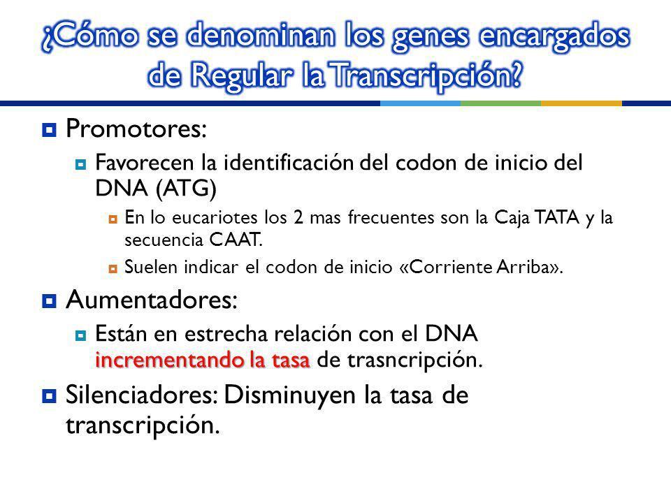 ¿Cómo se denominan los genes encargados de Regular la Transcripción