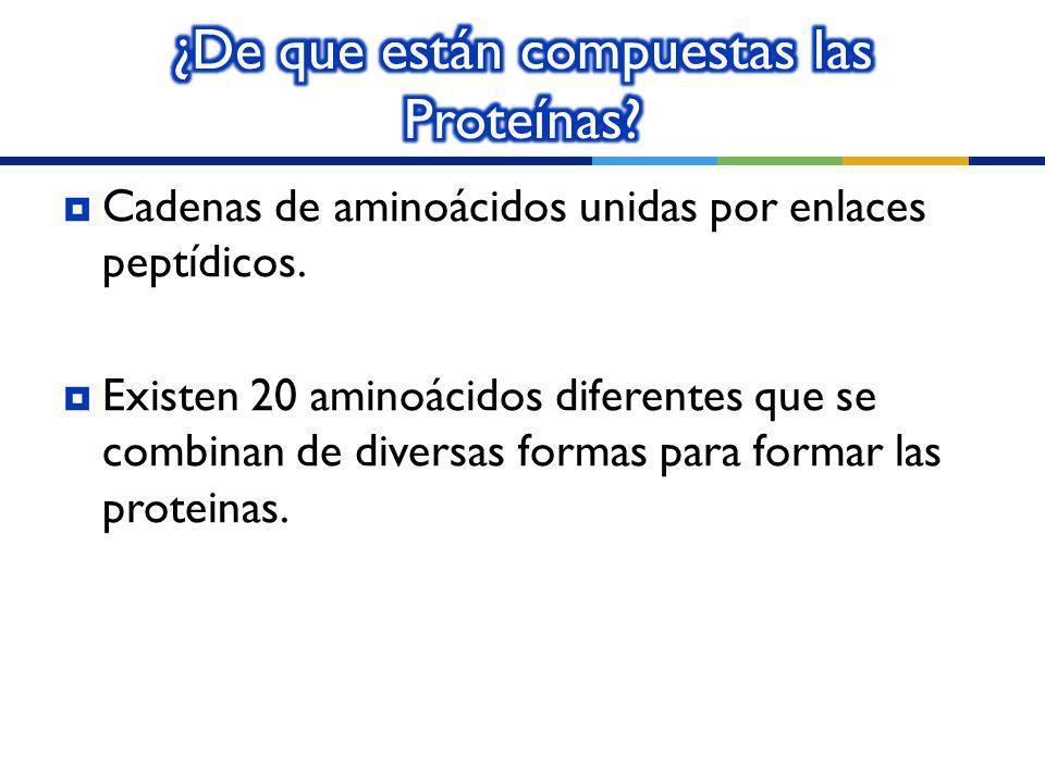 ¿De que están compuestas las Proteínas