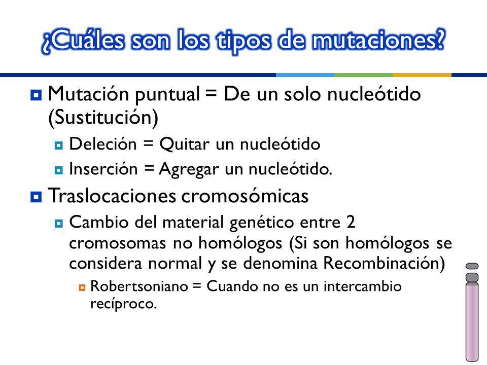 ¿Cuáles son los tipos de mutaciones