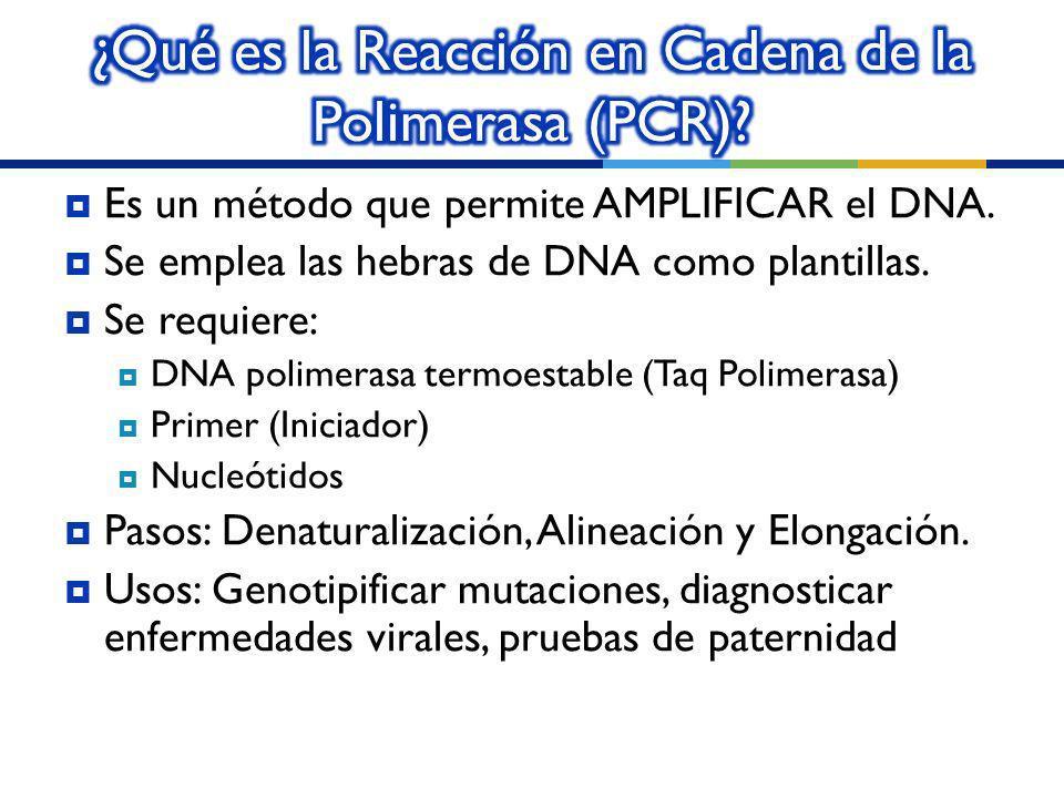 ¿Qué es la Reacción en Cadena de la Polimerasa (PCR)