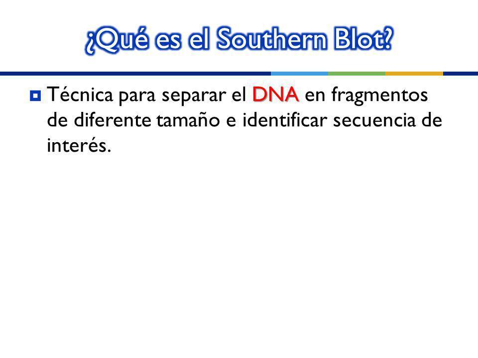¿Qué es el Southern Blot