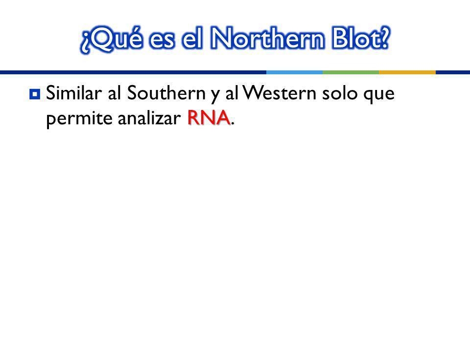¿Qué es el Northern Blot