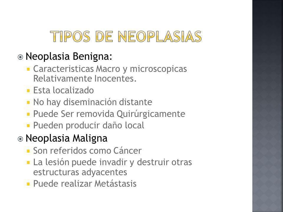 Tipos de Neoplasias Neoplasia Benigna: Neoplasia Maligna