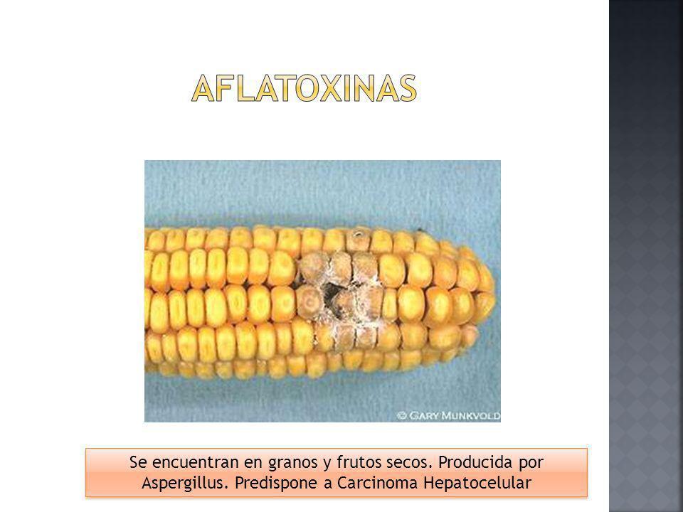 Aflatoxinas Se encuentran en granos y frutos secos.