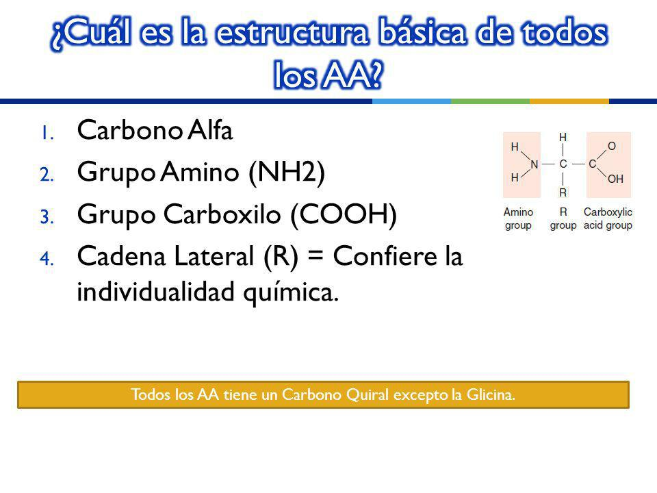 ¿Cuál es la estructura básica de todos los AA