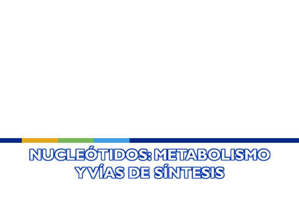 Nucleótidos: Metabolismo y vías de síntesis