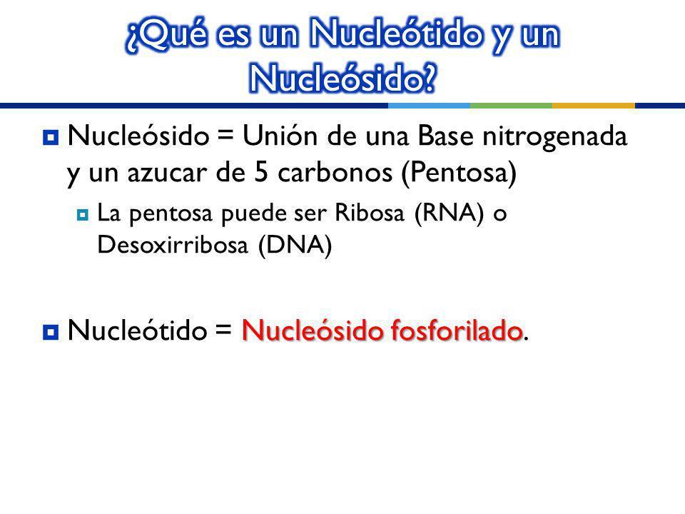 ¿Qué es un Nucleótido y un Nucleósido
