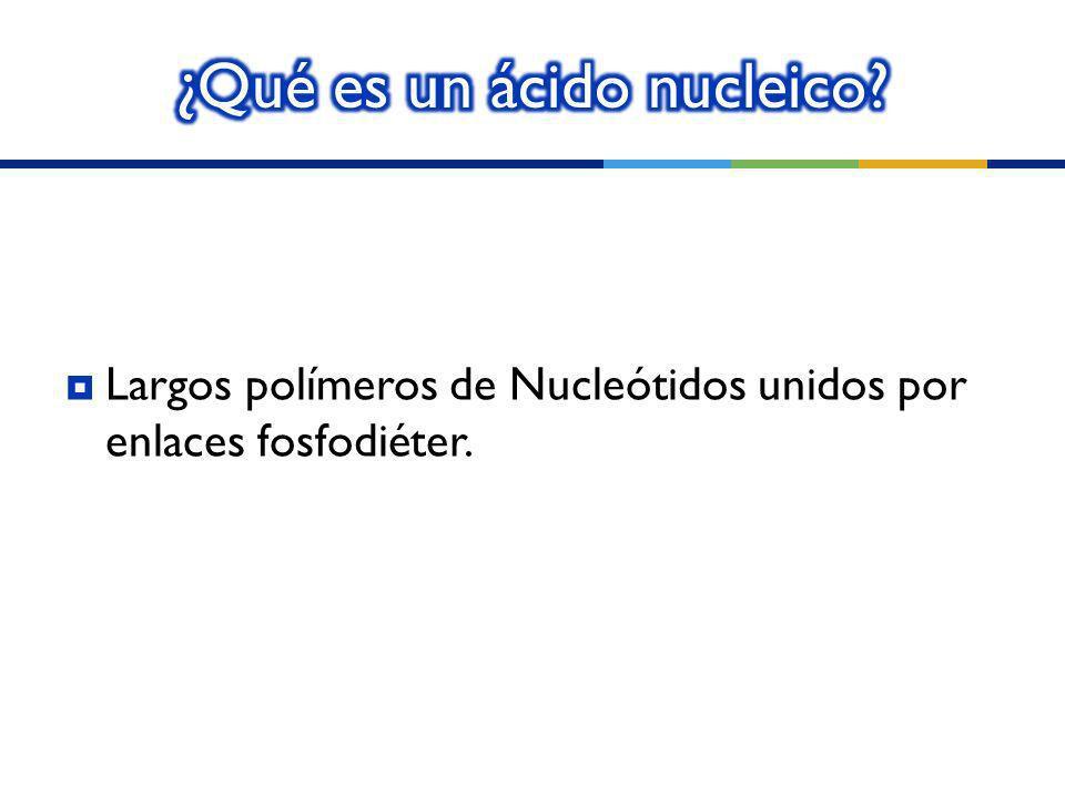 ¿Qué es un ácido nucleico
