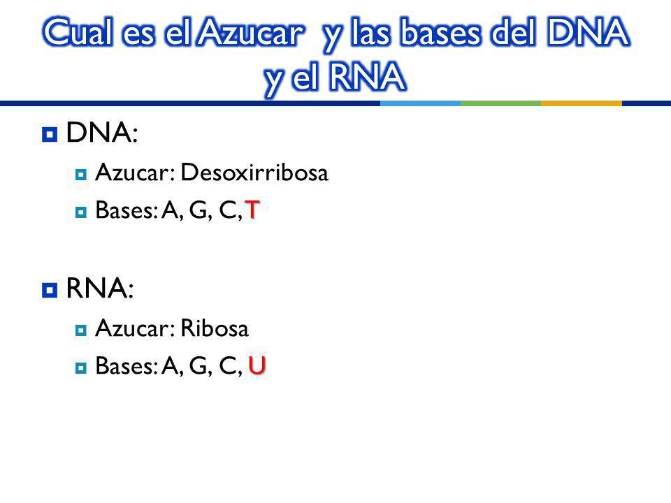 Cual es el Azucar y las bases del DNA y el RNA