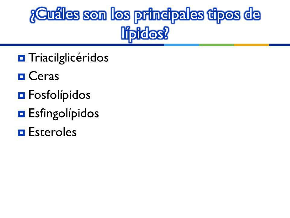 ¿Cuáles son los principales tipos de lípidos