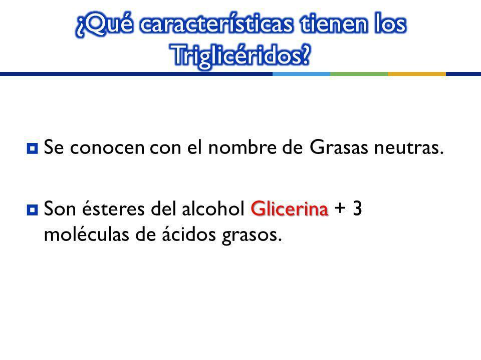 ¿Qué características tienen los Triglicéridos