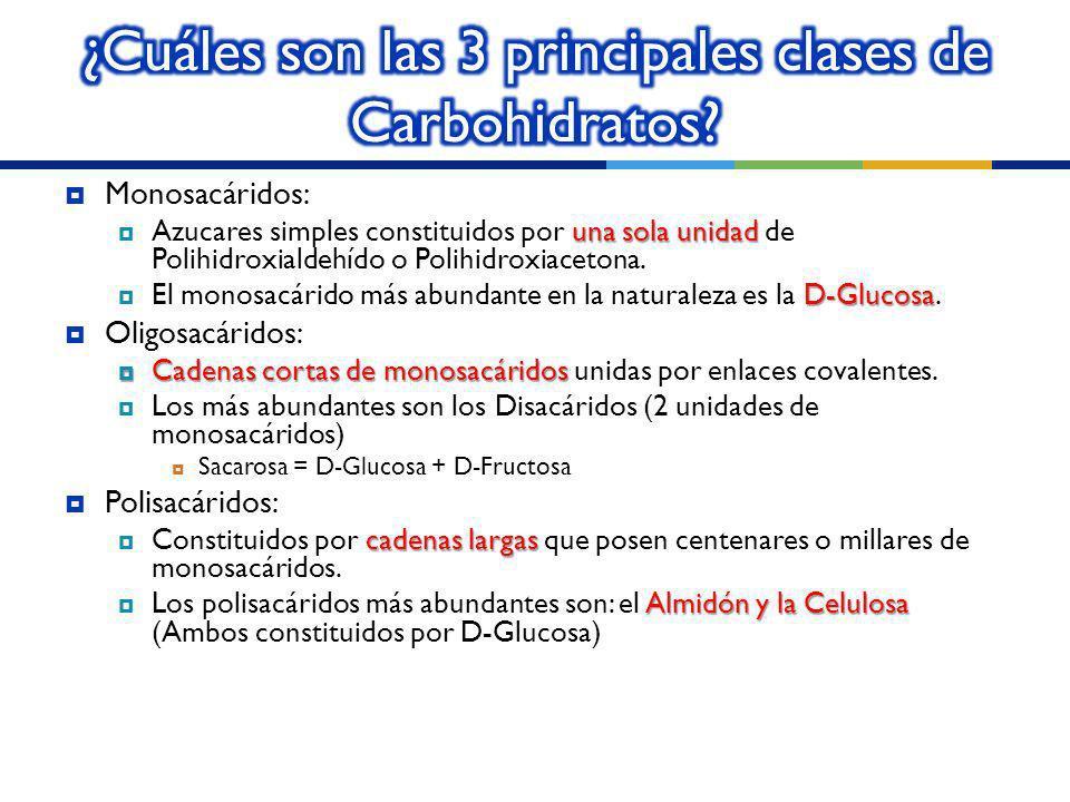 ¿Cuáles son las 3 principales clases de Carbohidratos