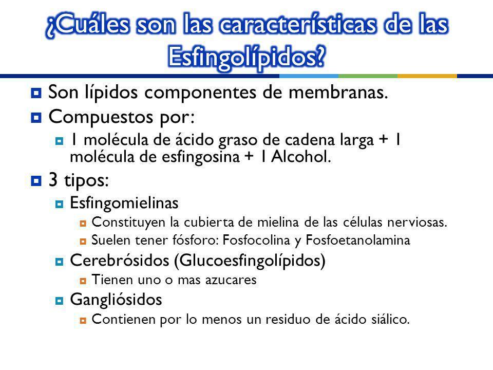 ¿Cuáles son las características de las Esfingolípidos