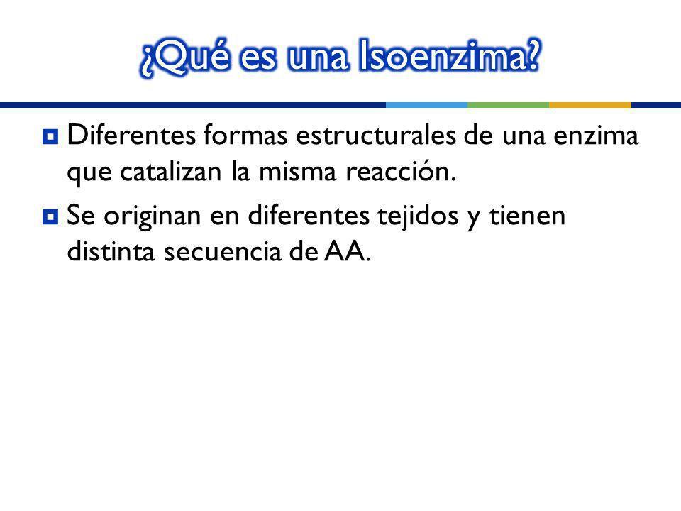 ¿Qué es una Isoenzima Diferentes formas estructurales de una enzima que catalizan la misma reacción.