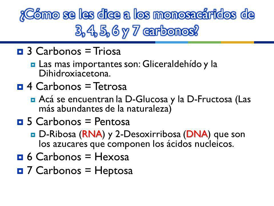 ¿Cómo se les dice a los monosacáridos de 3, 4, 5, 6 y 7 carbonos