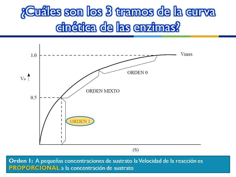 ¿Cuáles son los 3 tramos de la curva cinética de las enzimas