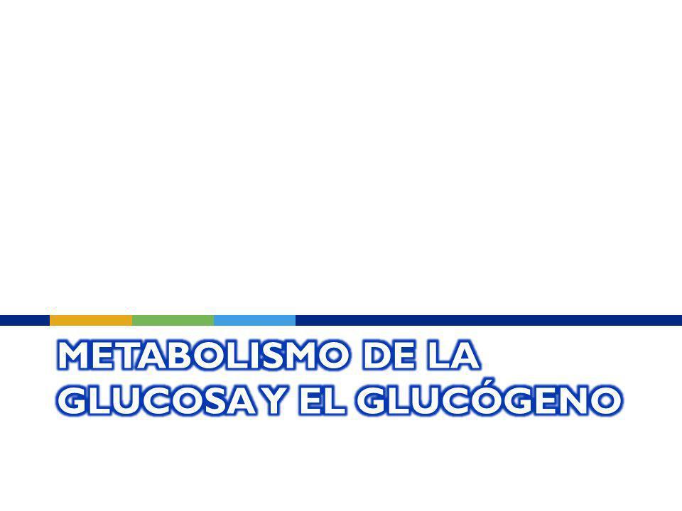 Metabolismo de la glucosa y el glucógeno