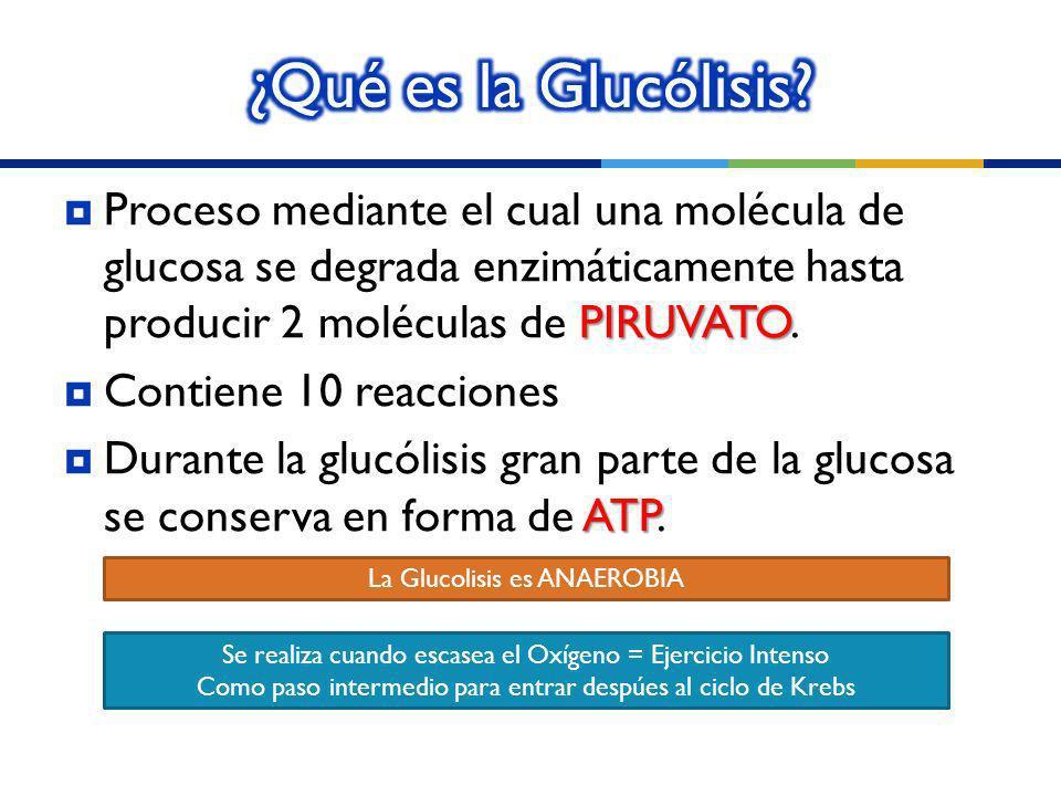 ¿Qué es la Glucólisis Proceso mediante el cual una molécula de glucosa se degrada enzimáticamente hasta producir 2 moléculas de PIRUVATO.