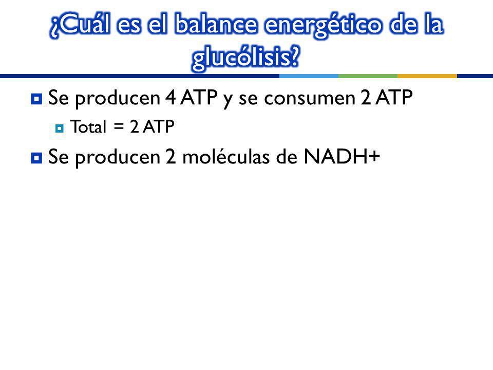 ¿Cuál es el balance energético de la glucólisis