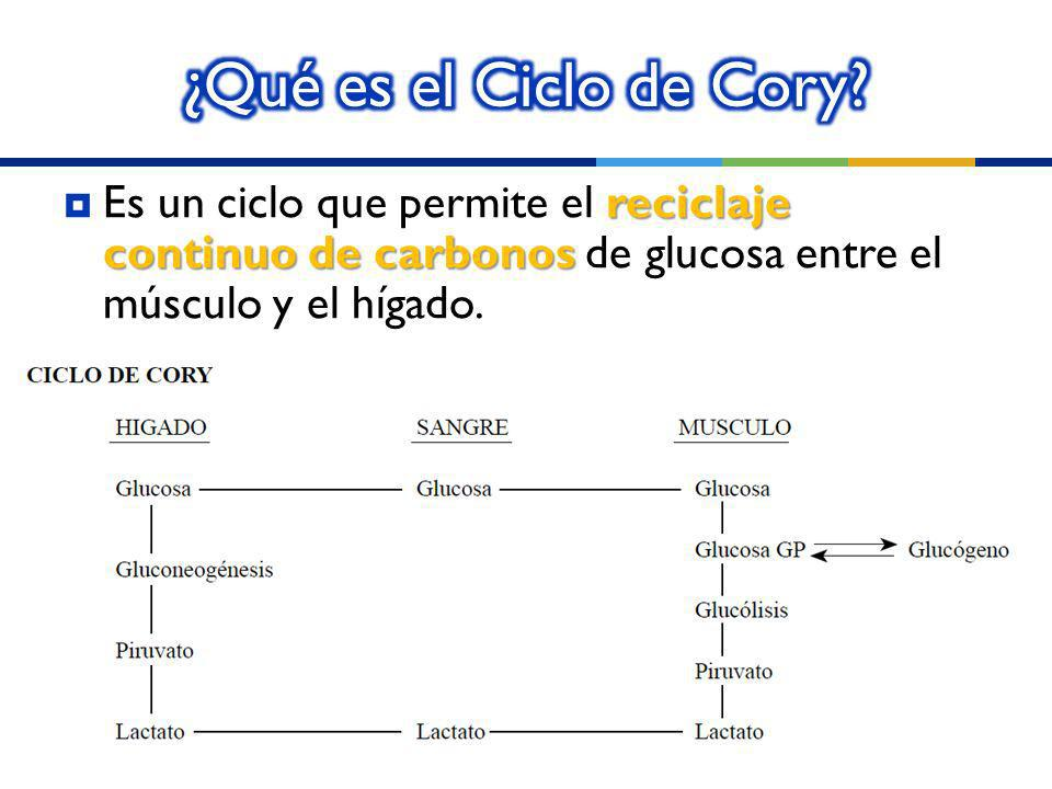 ¿Qué es el Ciclo de Cory.