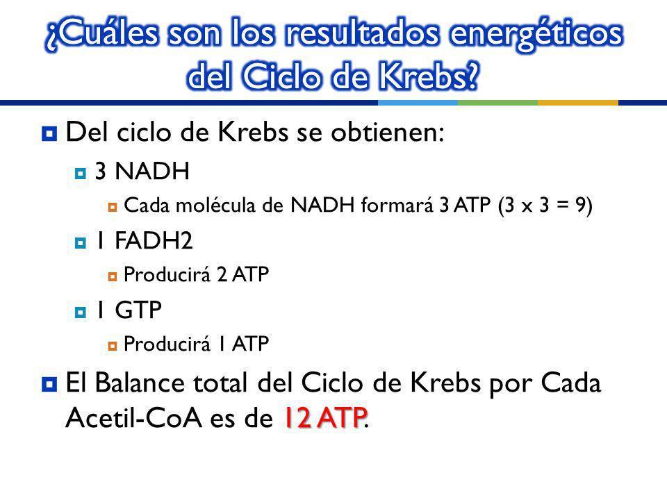 ¿Cuáles son los resultados energéticos del Ciclo de Krebs