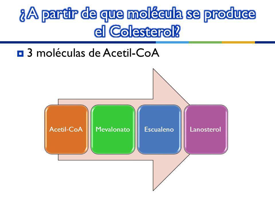 ¿ A partir de que molécula se produce el Colesterol
