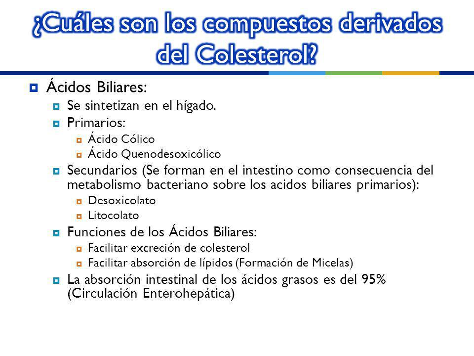 ¿Cuáles son los compuestos derivados del Colesterol