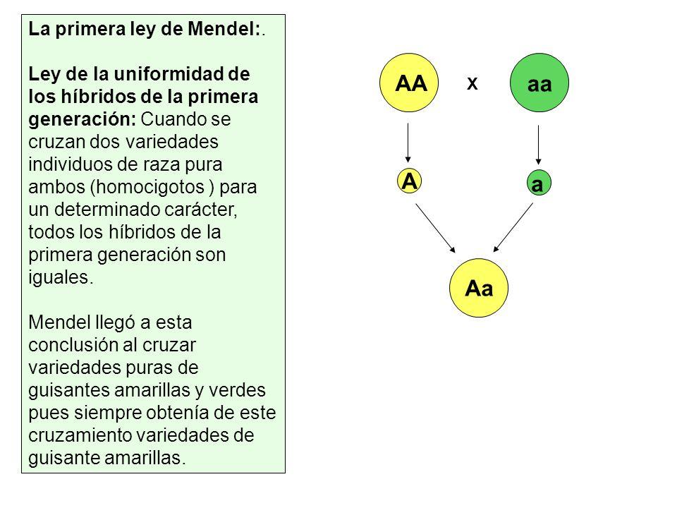 AA aa A a Aa La primera ley de Mendel:.