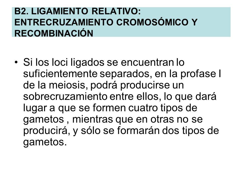 B2. LIGAMIENTO RELATIVO: ENTRECRUZAMIENTO CROMOSÓMICO Y RECOMBINACIÓN