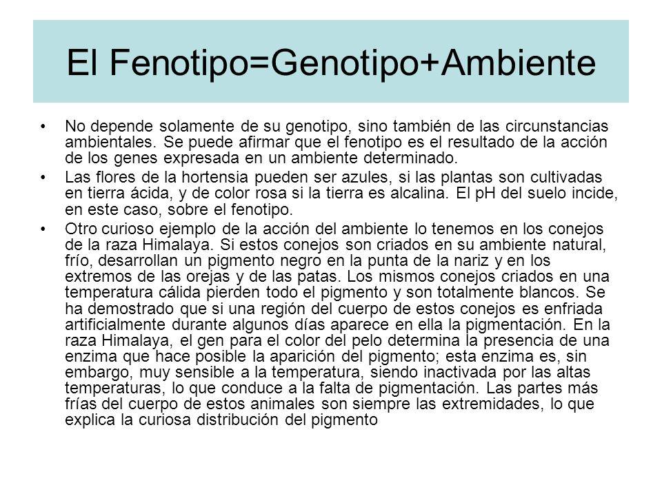 El Fenotipo=Genotipo+Ambiente