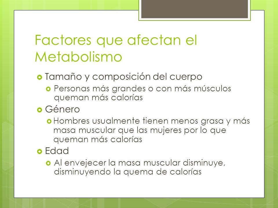 Factores que afectan el Metabolismo