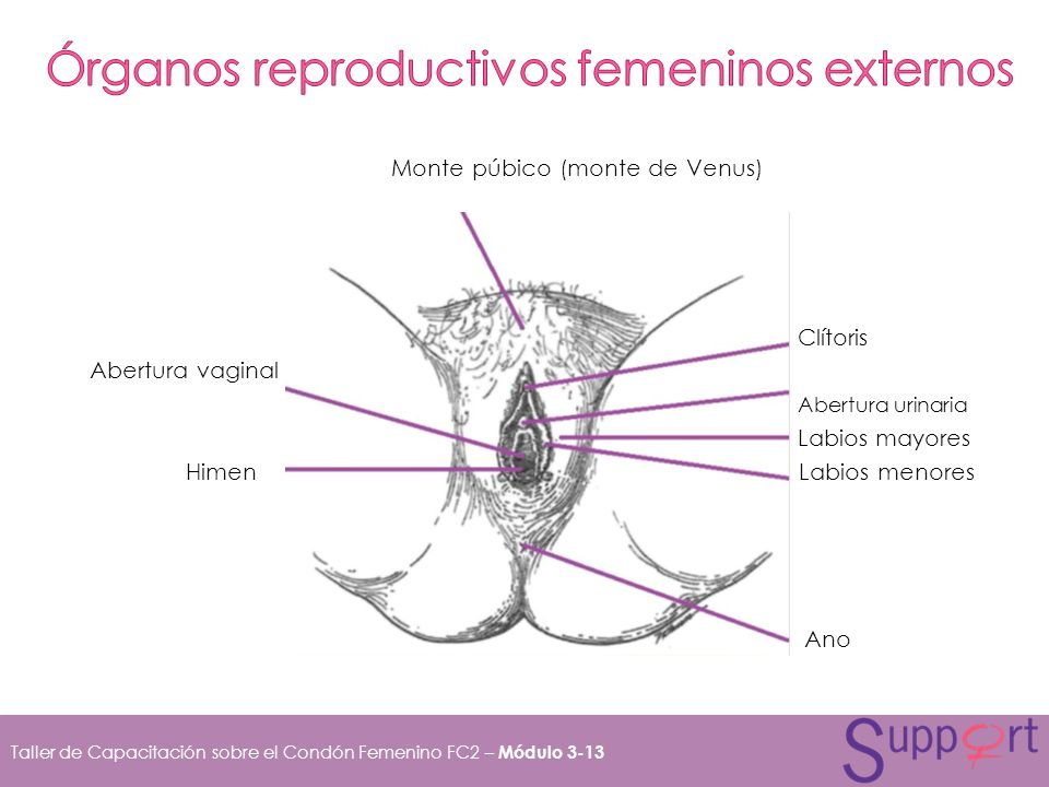 Órganos reproductivos femeninos externos