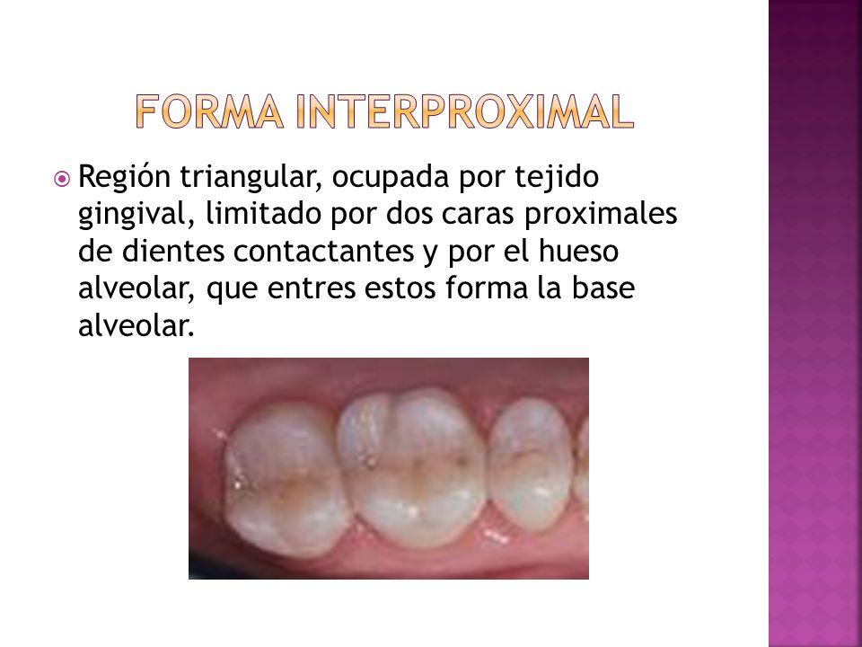 Forma interproximal