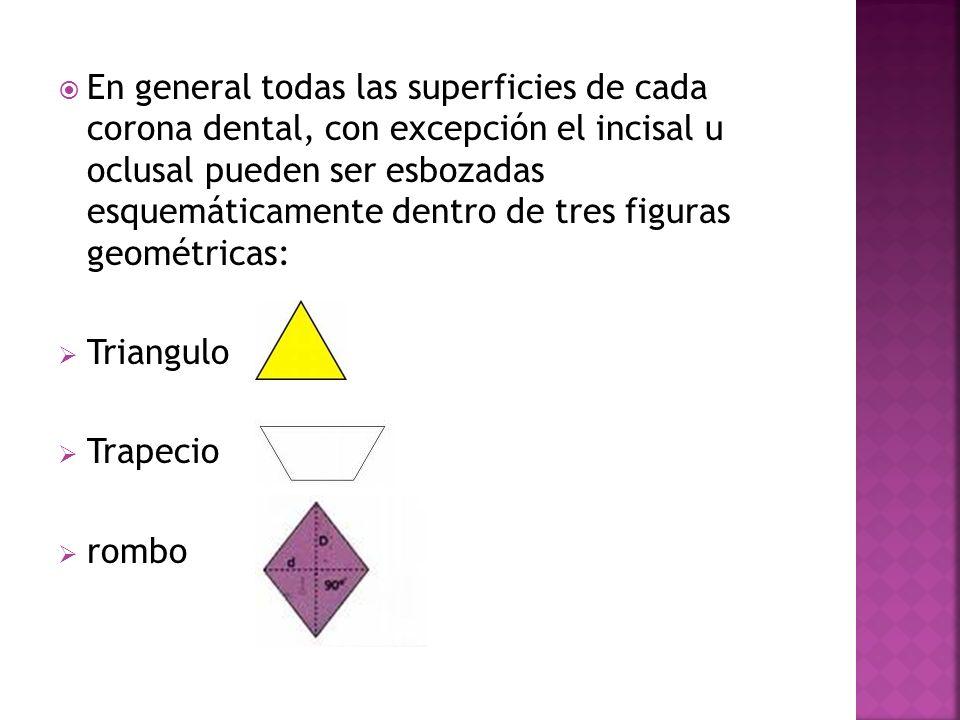 En general todas las superficies de cada corona dental, con excepción el incisal u oclusal pueden ser esbozadas esquemáticamente dentro de tres figuras geométricas: