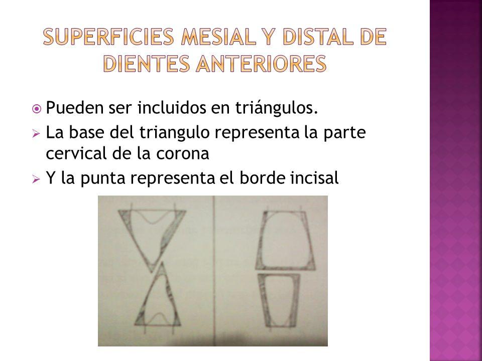Superficies mesial y distal de dientes anteriores