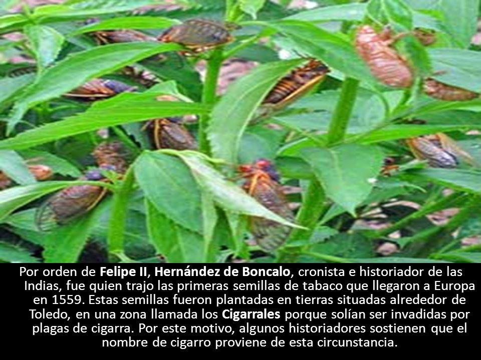 Por orden de Felipe II, Hernández de Boncalo, cronista e historiador de las Indias, fue quien trajo las primeras semillas de tabaco que llegaron a Europa en 1559.