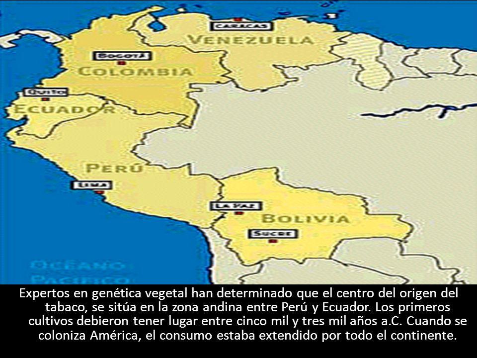 Expertos en genética vegetal han determinado que el centro del origen del tabaco, se sitúa en la zona andina entre Perú y Ecuador.