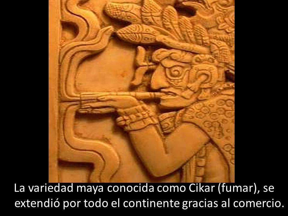 La variedad maya conocida como Cikar (fumar), se extendió por todo el continente gracias al comercio.