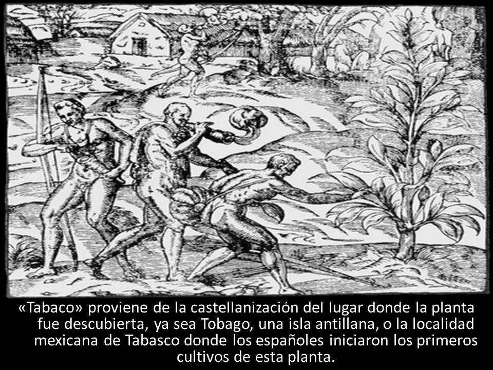 «Tabaco» proviene de la castellanización del lugar donde la planta fue descubierta, ya sea Tobago, una isla antillana, o la localidad mexicana de Tabasco donde los españoles iniciaron los primeros cultivos de esta planta.