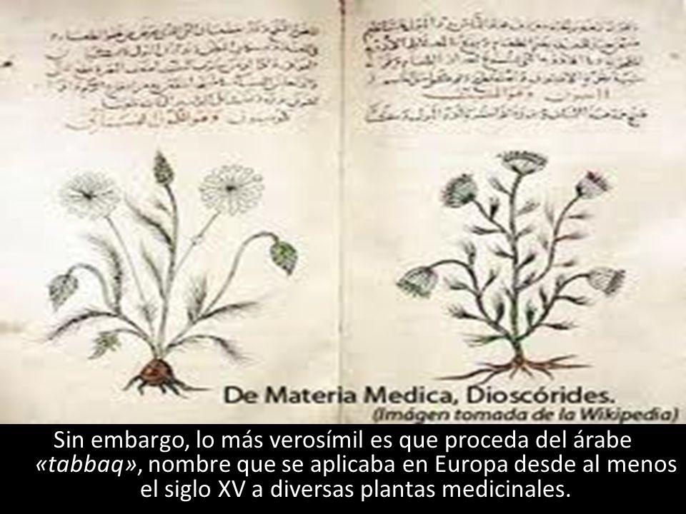 Sin embargo, lo más verosímil es que proceda del árabe «tabbaq», nombre que se aplicaba en Europa desde al menos el siglo XV a diversas plantas medicinales.