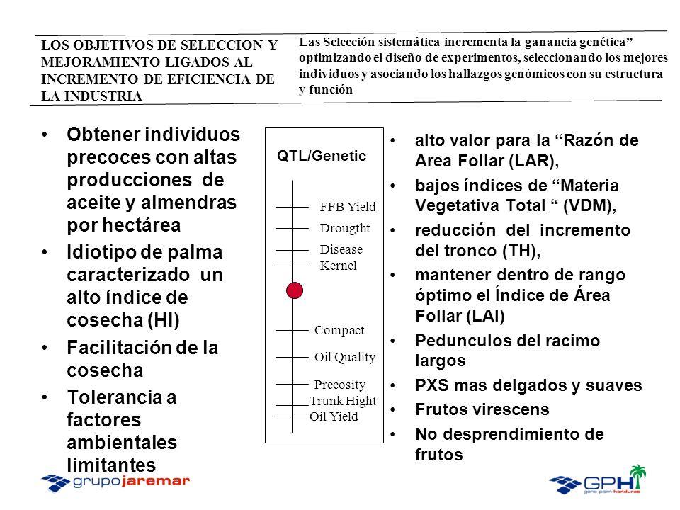Idiotipo de palma caracterizado un alto índice de cosecha (HI)